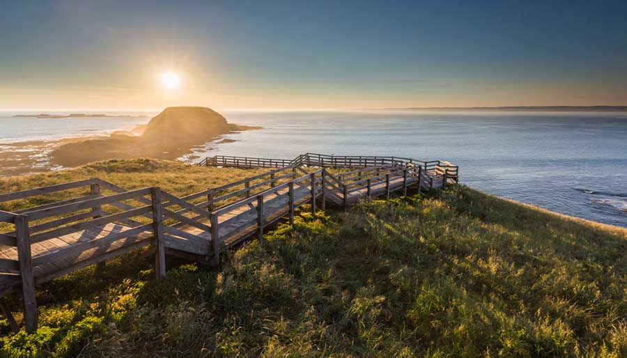 7 Incredible Phillip Island & Bass Coast Experiences To Have On Your Big Lap