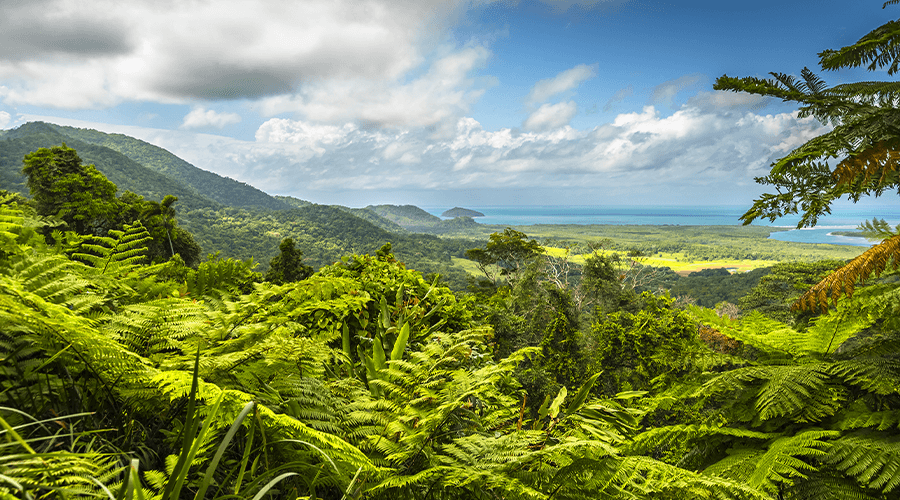 Top 3 Rainforests In Queensland