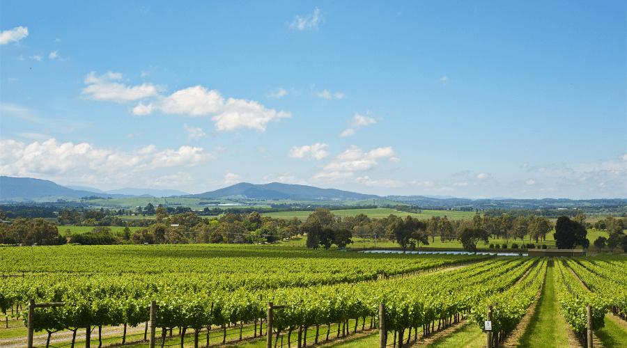 Top 20 Wineries To Visit In Victoria