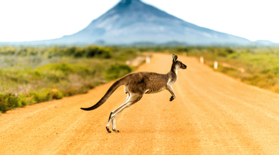 27 Unexpected Things You'll Come Across Whilst Driving Around Australia