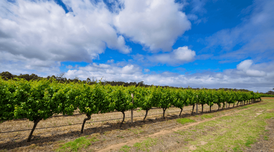 Top 21 Stunning Wineries You Must Visit In Western Australia